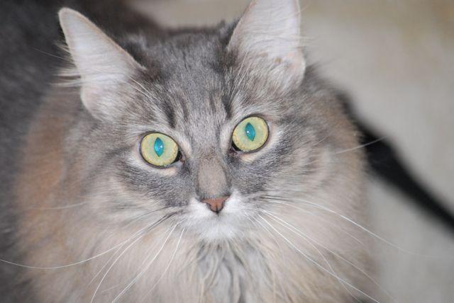 Cats_scoot_across_the_floor
