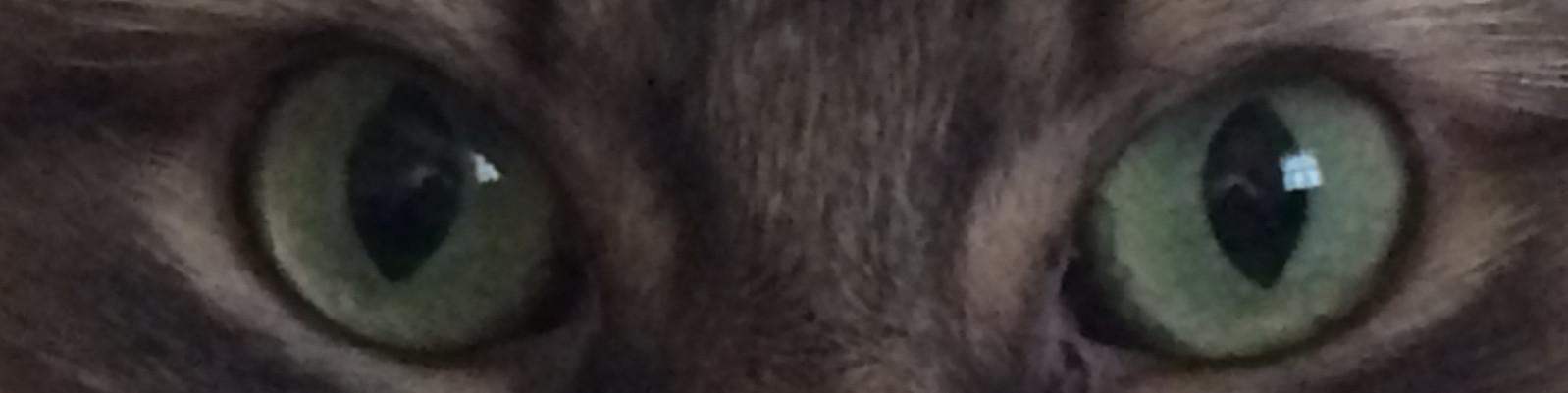 Kali's Eyes