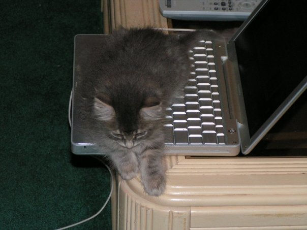 Kali_Older_Cats_Like_Computers