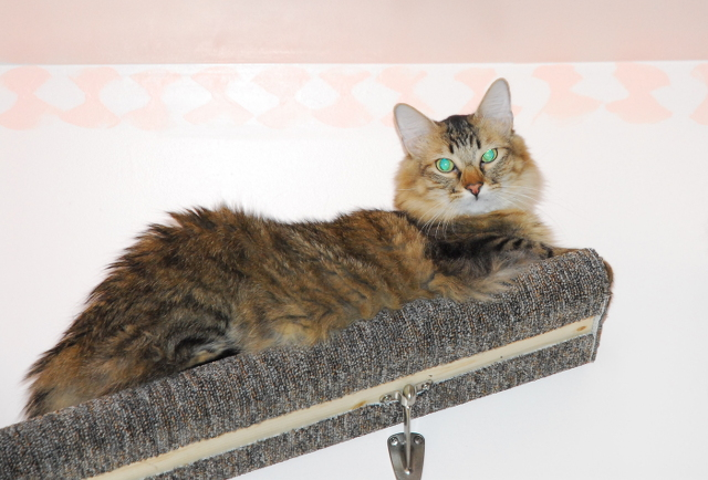 Do Cats Like To Perch Up High