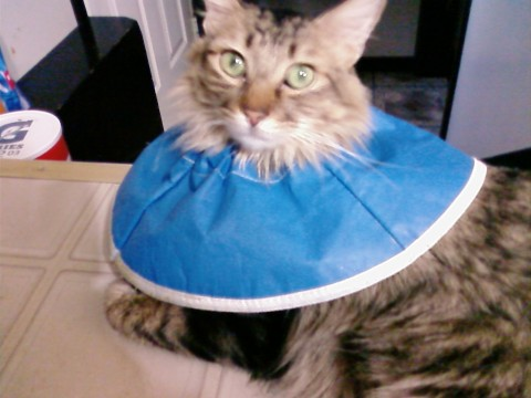 Chase blue collar cone of shame