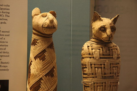 Cat_Mummies_in_a_British_Museum
