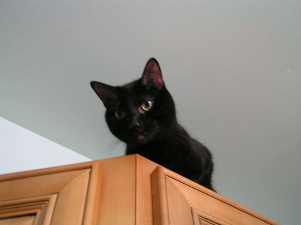 cat furniture protector spray