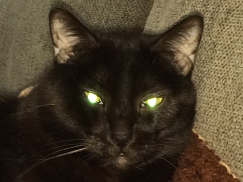 Gizmo_Cats'_Eyes_Glow