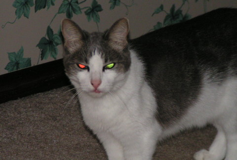 Kitty_Cats_Eyes_Glow