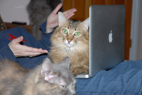 Chase_On_Computer_Crazy_Cat_Lady