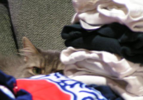 Kali_Hiding_FIreworks_Scare_Cats