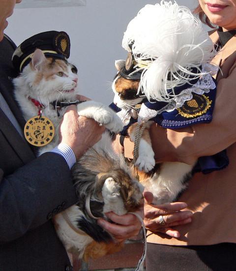 Feline_Stationmaster_Nitama_With_Tama