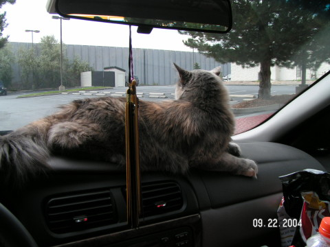 Aria_Car_Travel_with_Cats