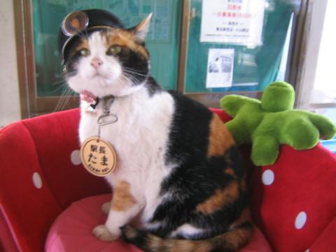 Feline_Stationmaster_Tama