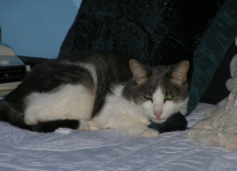 Kitty_Caring_For_Abused_Cats