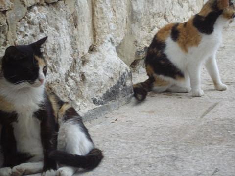 Street_Cats_Of_Jerusalem_Israel_Deporting_Cats