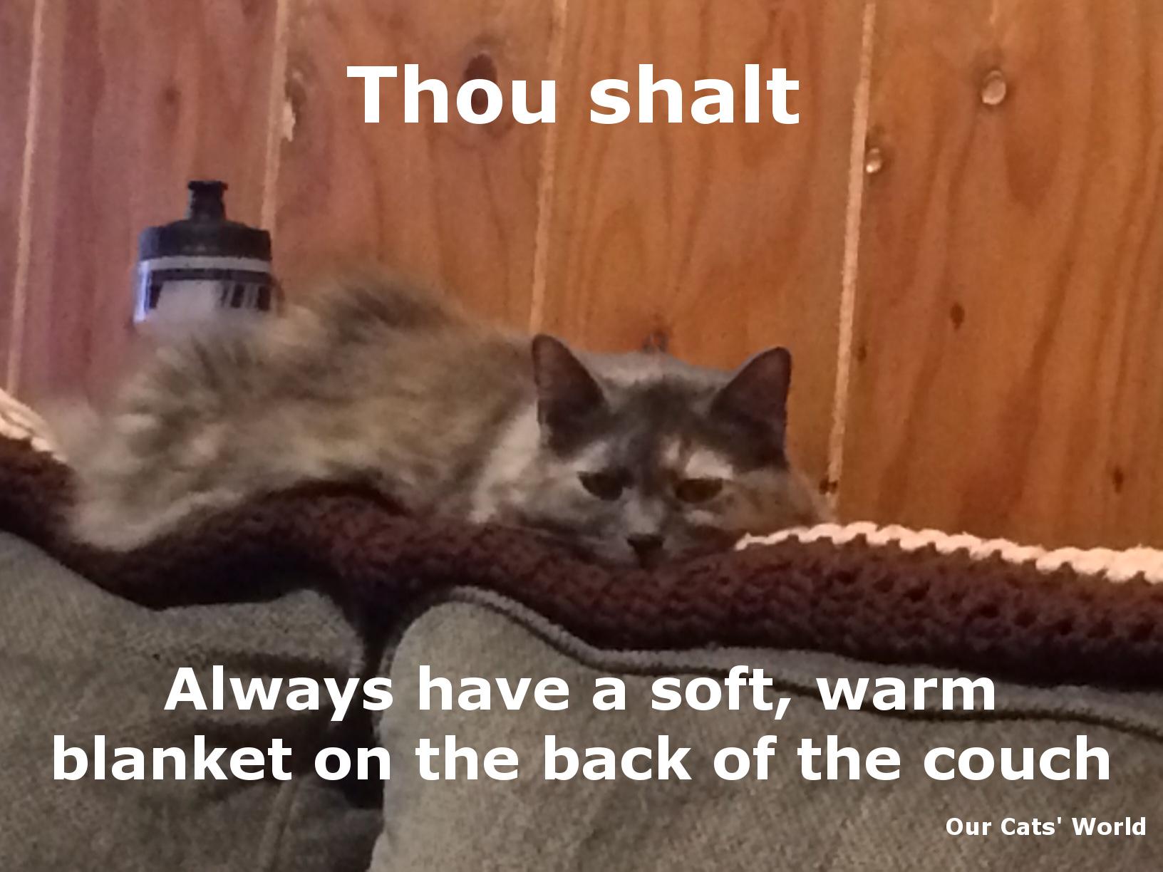 Aria_Bored_Feline_Commandment