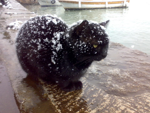 Black_Cats_In_Winter