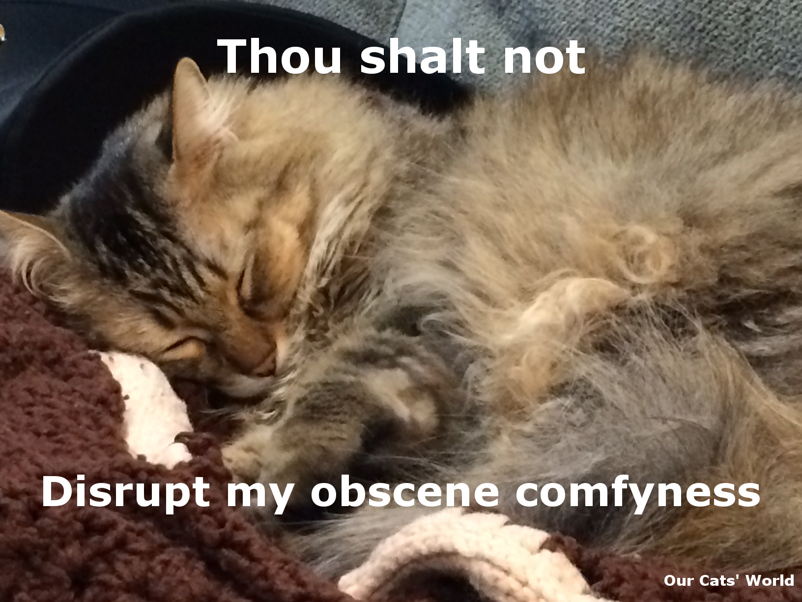Chase_Cozy_Comfy_Feline_Commandments