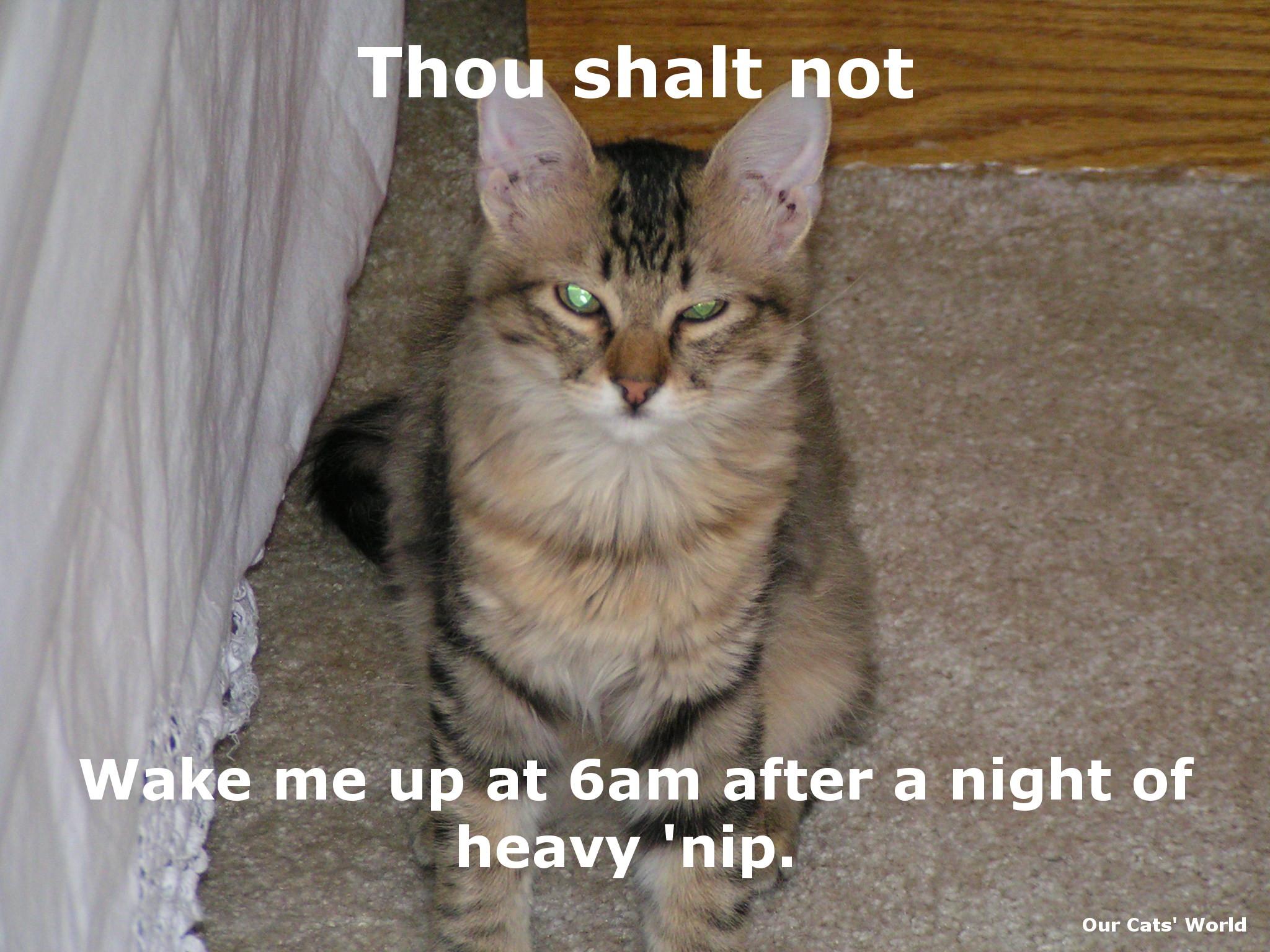 Chase_High_Feline_Commandments