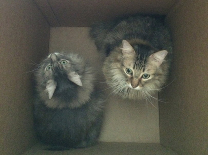 Chase Kali Box (enlarged) cats in boxes