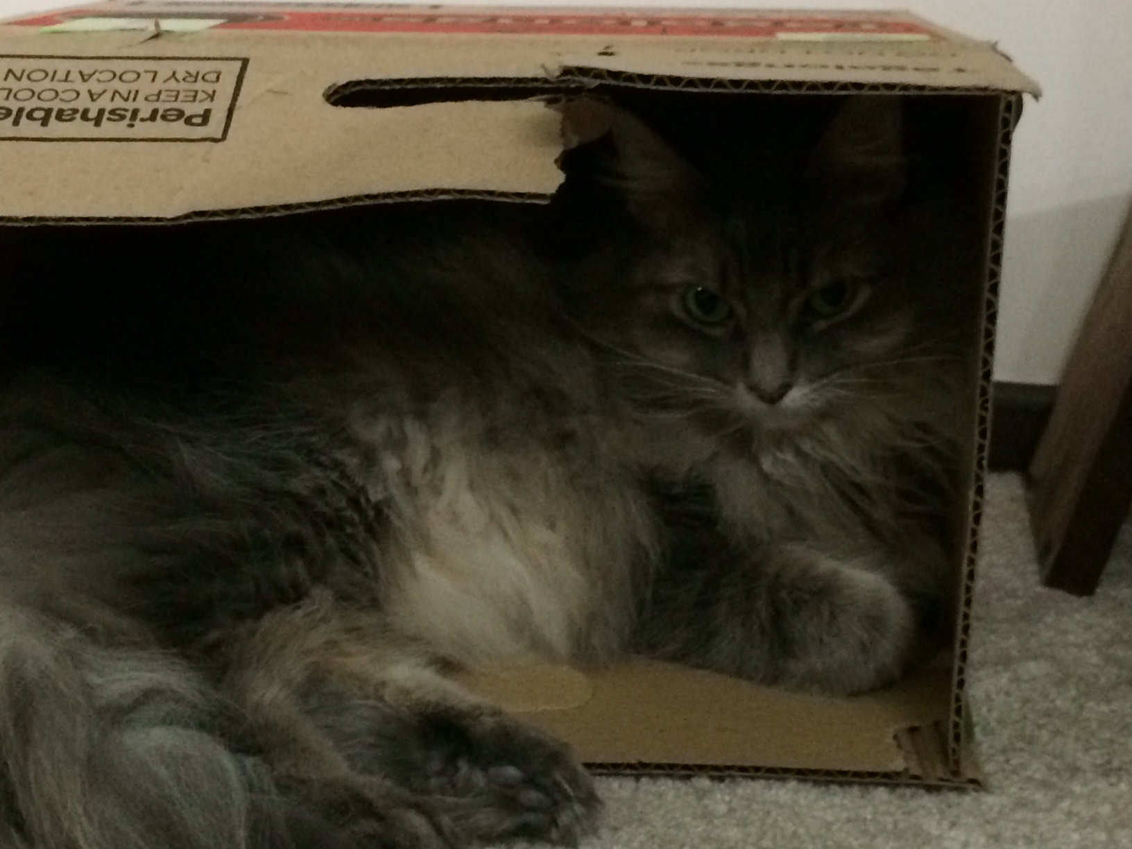 Kali Box Lounging cats in boxes
