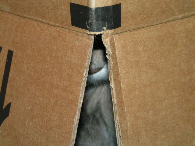 Kali Nose cats in boxes