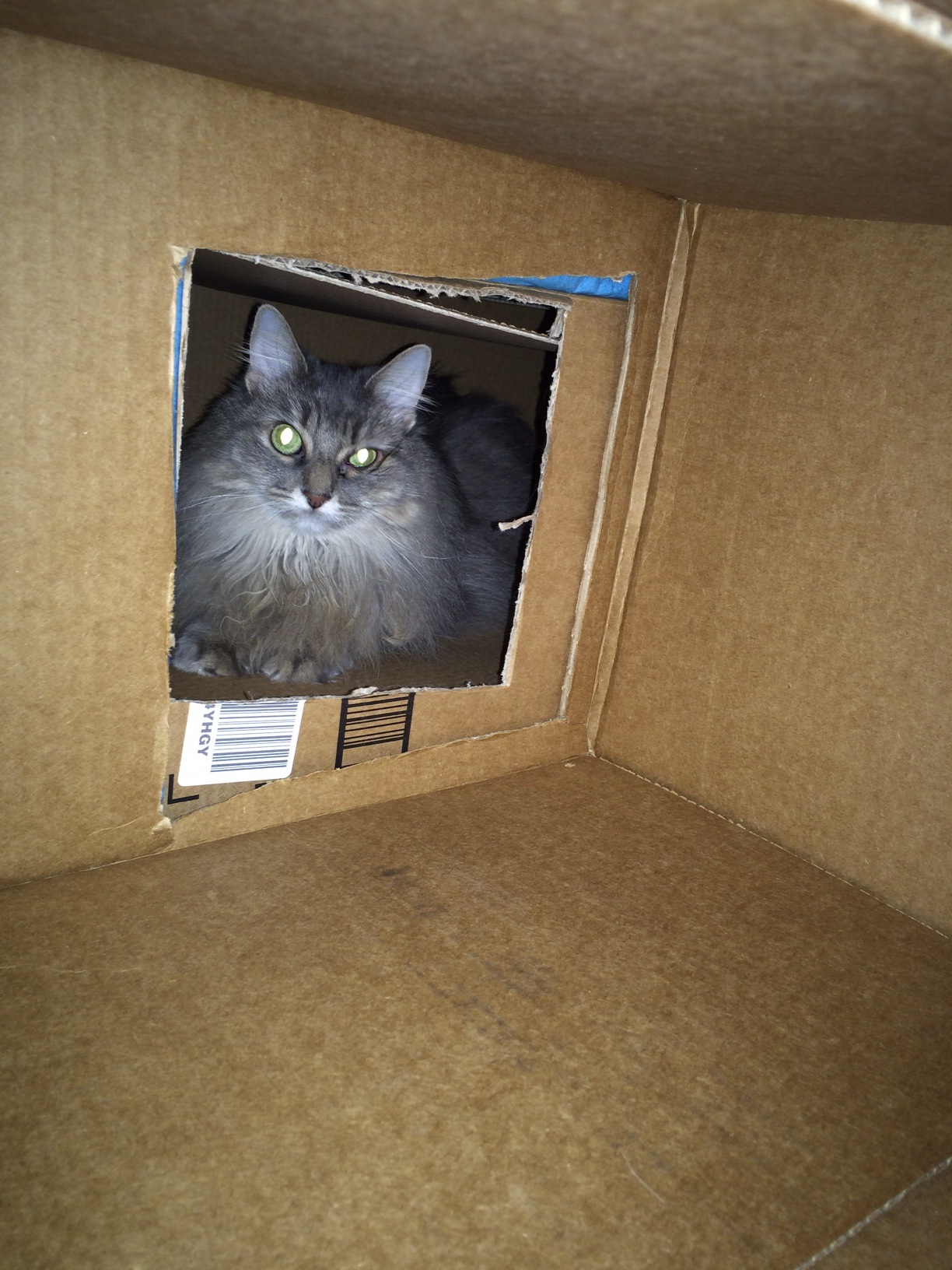 Kali Cat Houses cats in boxes