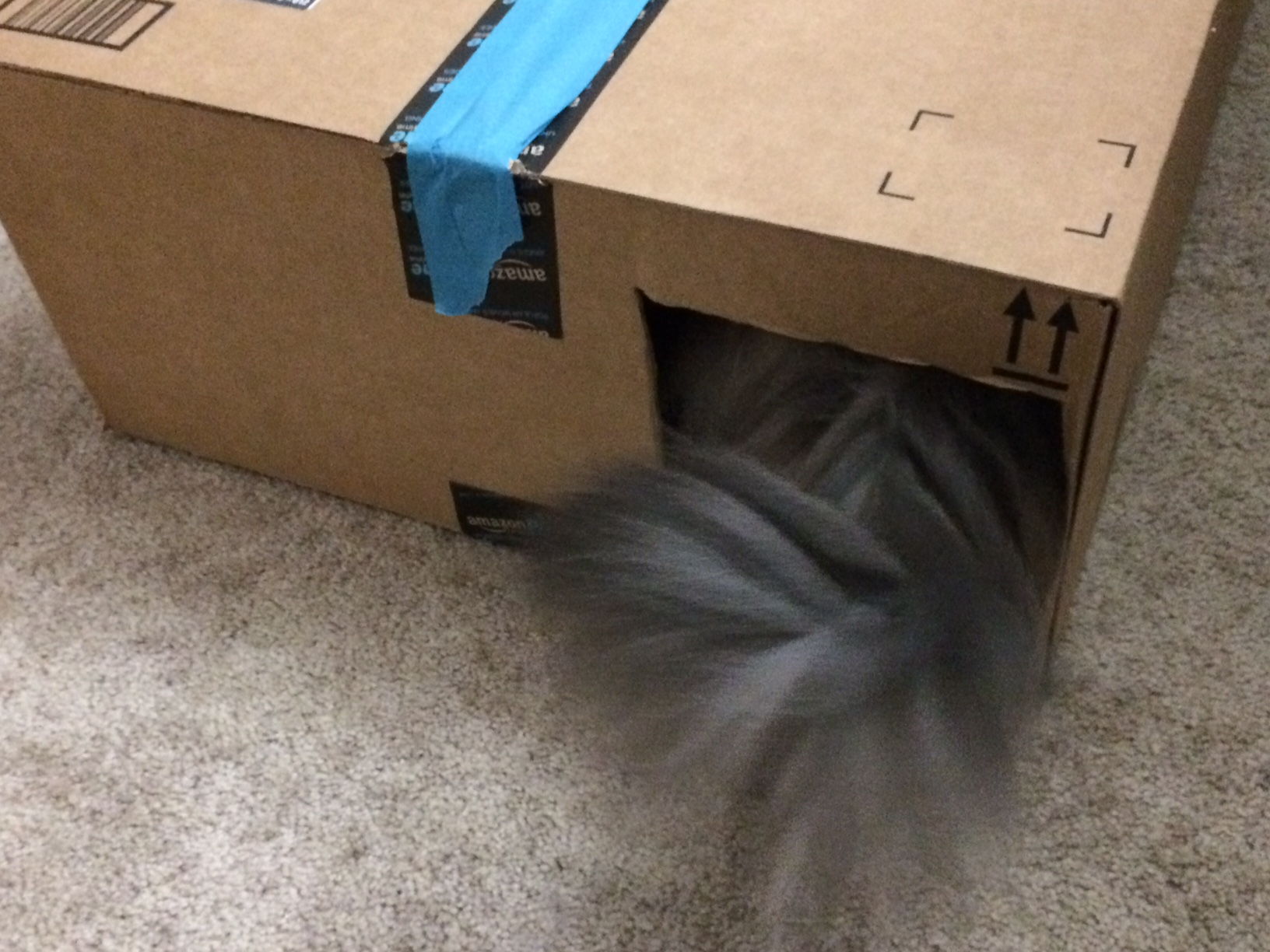 Kali Tail Cat Houses cats in boxes