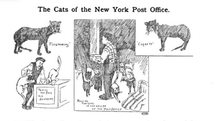 New York Post Office Cats
