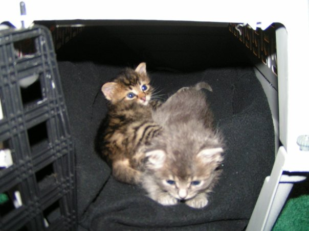 Kittens right cat carrier
