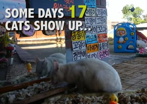 Cats Meok Bant